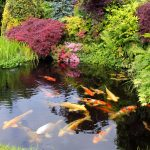 Best Location for a Garden Pond