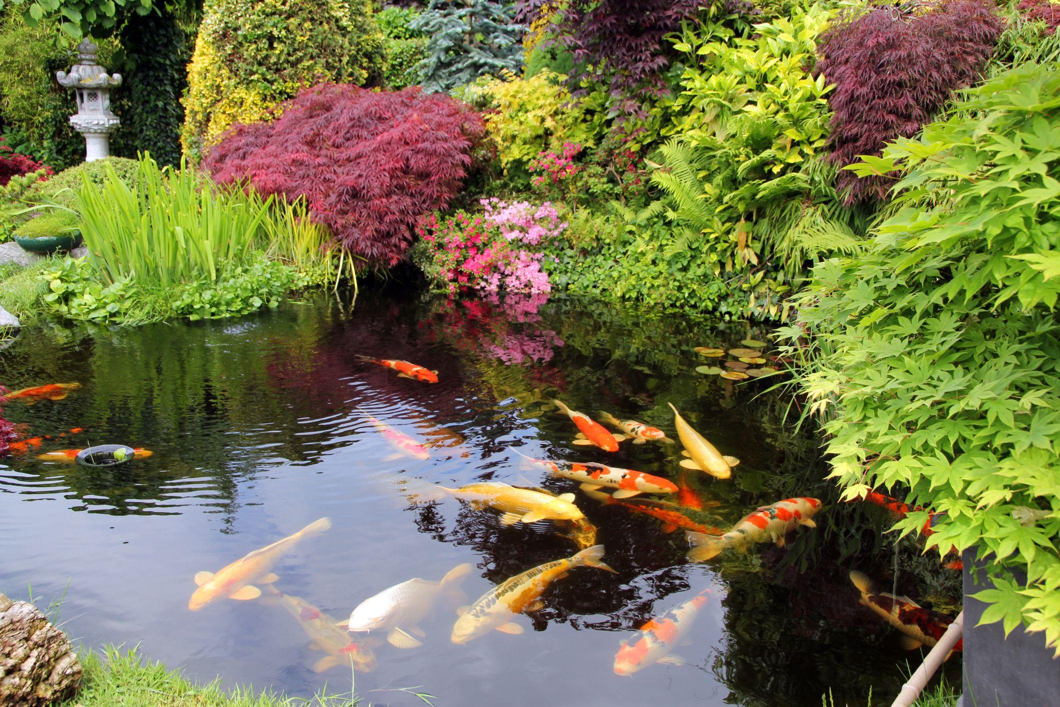 best location garden pond