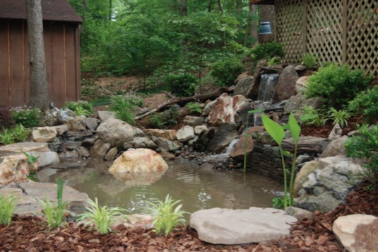 9 small backyard pond ideas for Popular pond fish
