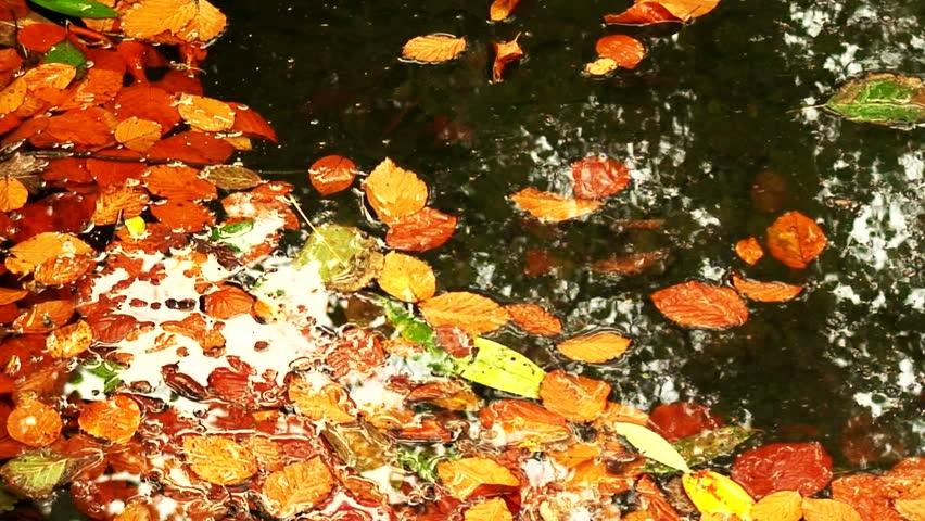 pond full of leaves