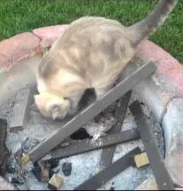 cat near fire pit