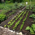Waterloo Gardeners: Sowing Seeds of Friendship and Fortitude for Over a Century