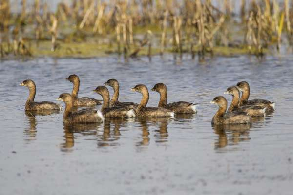 Friends of Brazoria Wildlife Refuges