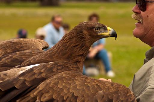 brazoria wildlife refuge birds of prey