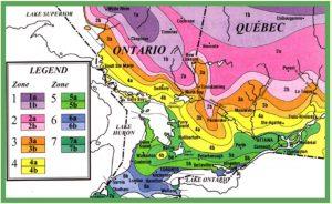 tree zones in Ontario Ca.