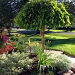 Best Trees for Your Backyard Garden in Southern Ontario, Canada