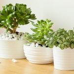 The Complete Guide To Succulent Care