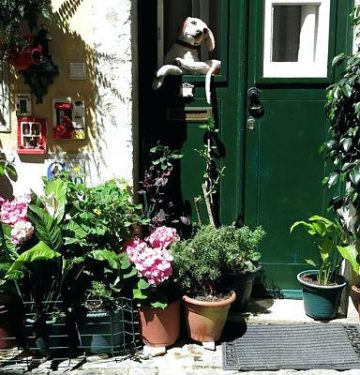 moving-house-plants-guide-to-moving-house-plants-moving-houseplants-outside-summer-moving-houseplants-outside