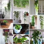 Pothos Plant Care – Your Complete Guide